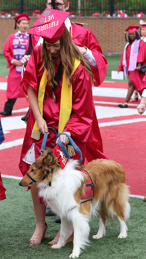 An undergraduate student walks toward the stands, ready to graduate, with her service dog. She wears a cap with the message: future vet.