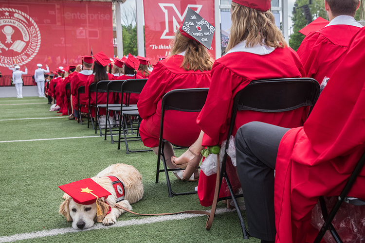 A service dog in training wears a graduation cap as he lays next to his trainer–a graduating 4-paws volunteer
