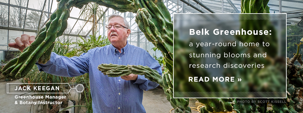 Belk Greenhouse: a year-round home to stunning blooms and research discoveries. Read more » Jack Keegan: Greenhouse Manager and Botany Instructor. Photo of Jack examining a cactus. Photo by Scott Kissell.