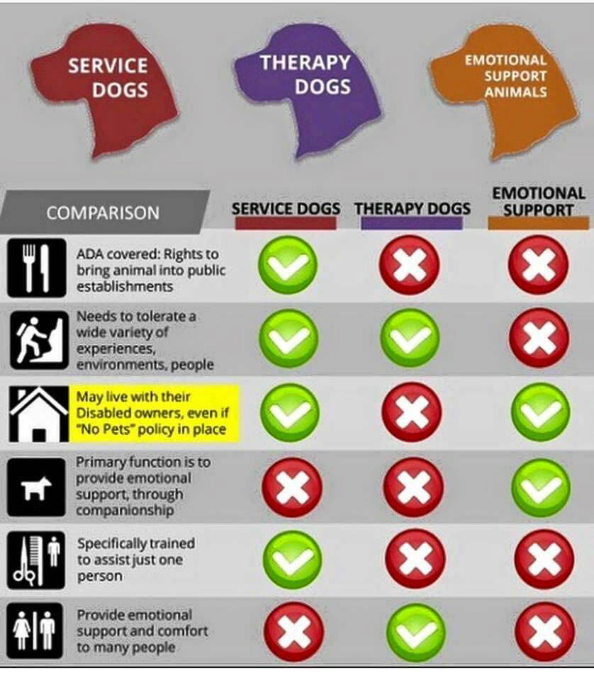chart comparing service dogs, therapy dogs and emotional support animals explaining that service dogs are used for many different situation except to primarily provide emotional support