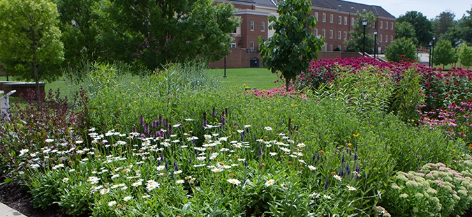 The Pearson Plaza Butterfly Garden Provides Host And Nectar Plants For  Butterflies, Bees And Other