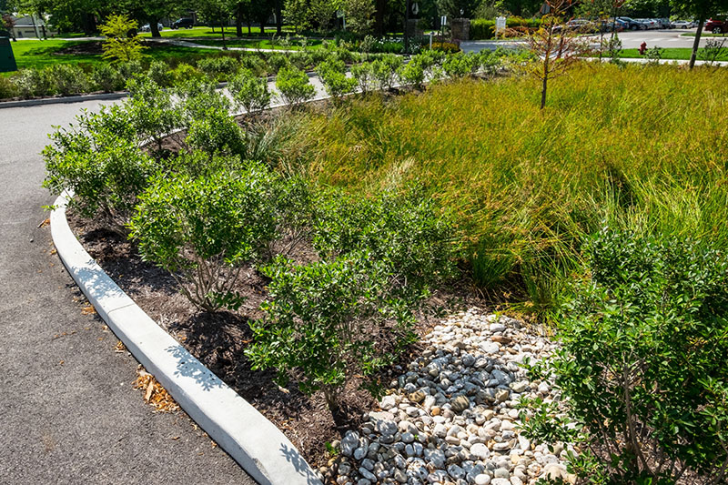 Miami\'s rain gardens slow and purify runoff while adding beauty and ...