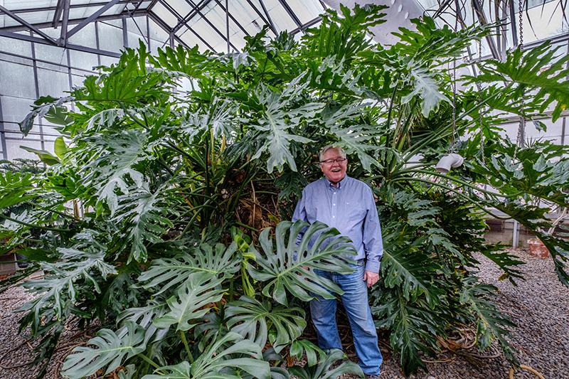 grn-jack-giant-plant.jpg