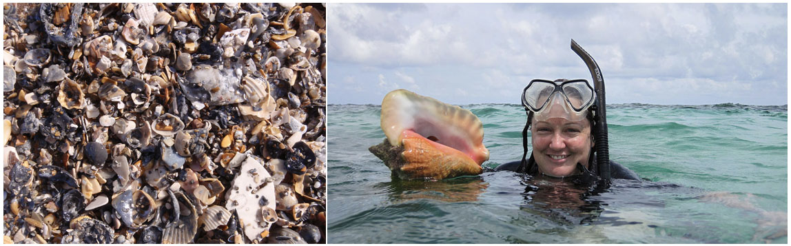 Carrie Tyler, assistant professor of geology and environmental earth sciences, holds a conch shell. At left, a death assemblage, or shell graveyard (photos courtesy of Majken Schimmel and Tyler).