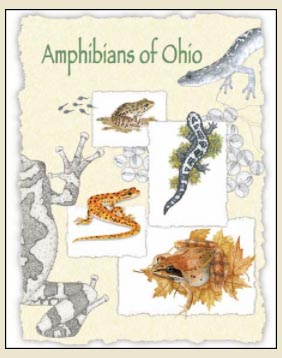 mike-wright-amphibians-book-cover