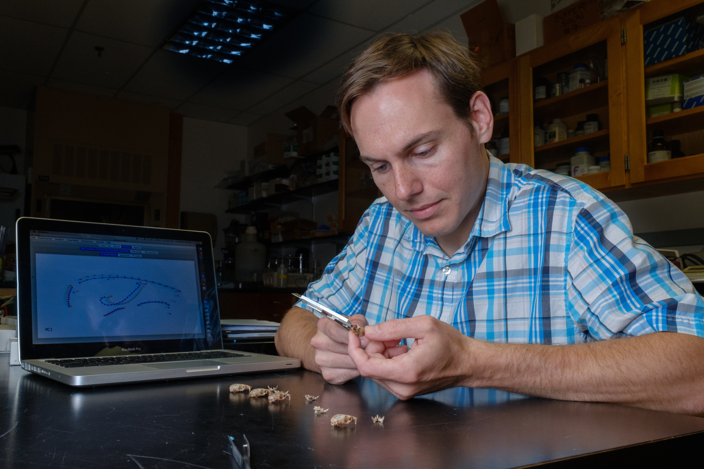 "Miami University graduate student Joseph Baumgartner measures the differences in cranium shape between different mouse populations. He thinks part of the white-footed mouse's ""winning"" strategy comes from its ability to develop successful traits in different environments."