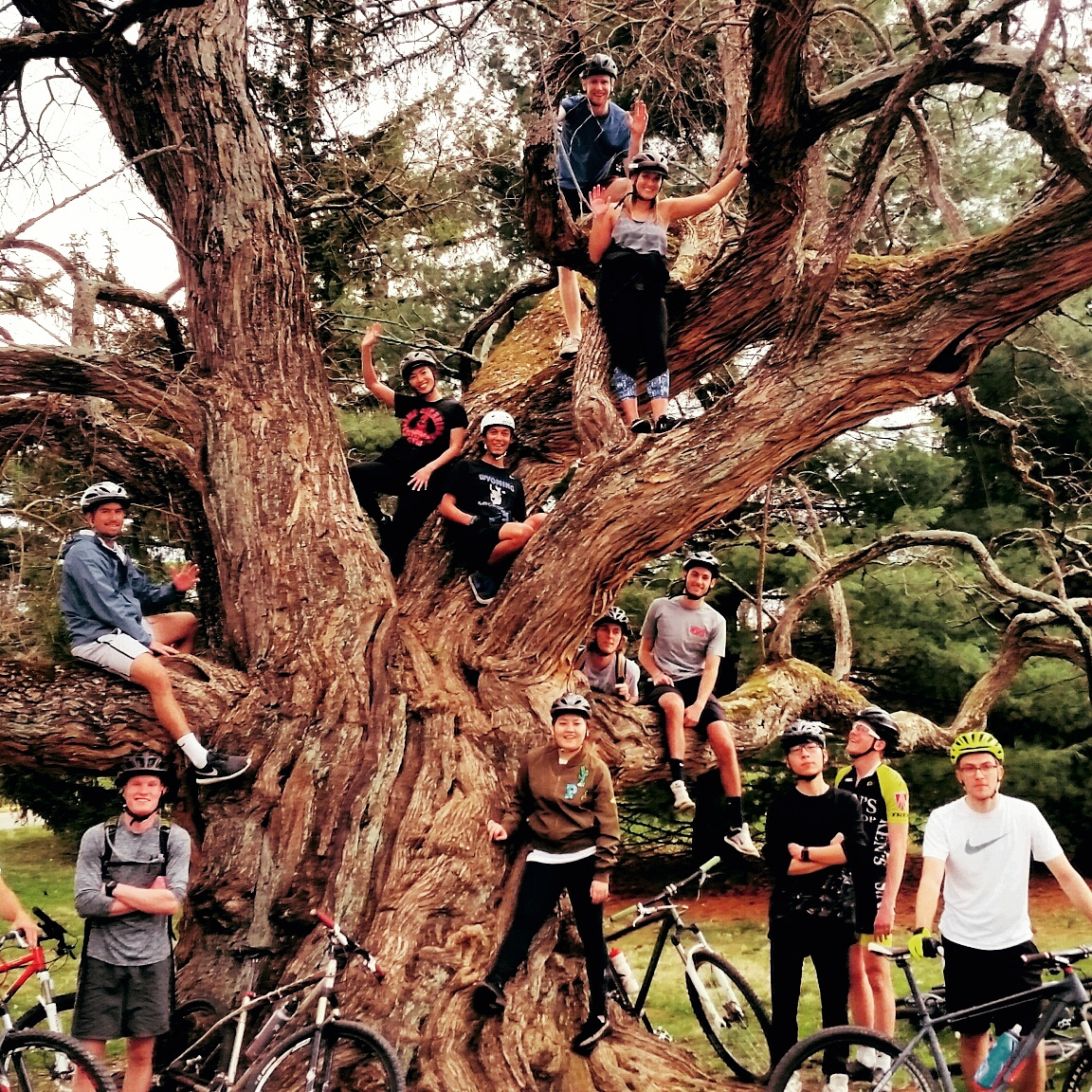 Students in a mountain bike club pose in a large tree.