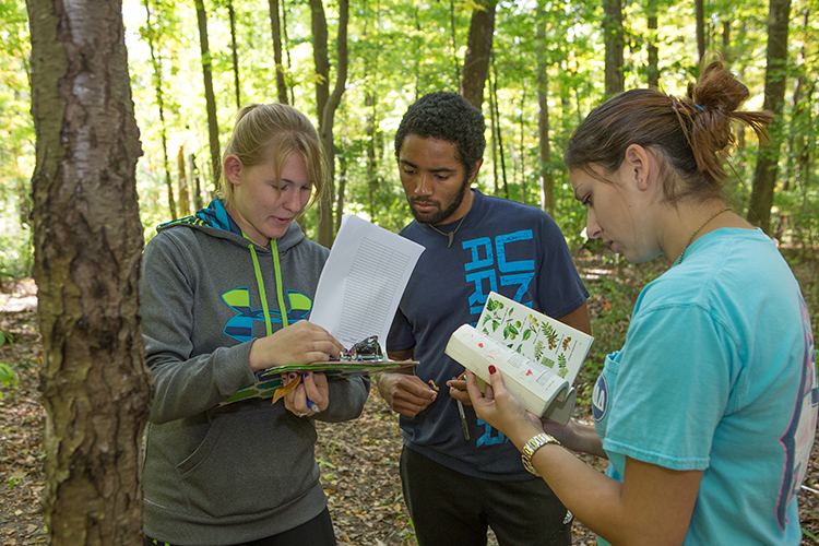 Ecology students comparing notes in a forest during a class outing