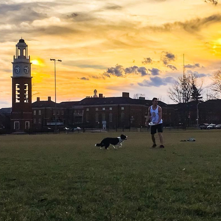 A student throws a frisbee with his border collie on cook field
