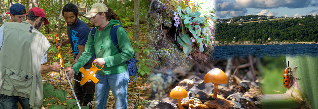 Composite photo of faculty and  students in field; fungi, beetle, lake, arbutus
