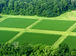 agroecosystem Abstract long-term agroecosystem experiments can be defined as large-scale field experiments more than 20 years old that study crop production, nutrient cycling, and environmental impacts of agriculture.