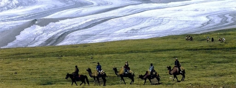 Nomads ride alpacas in Mongolia.