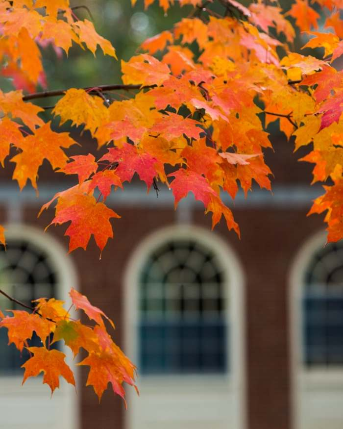 orange leaves in front of brick building