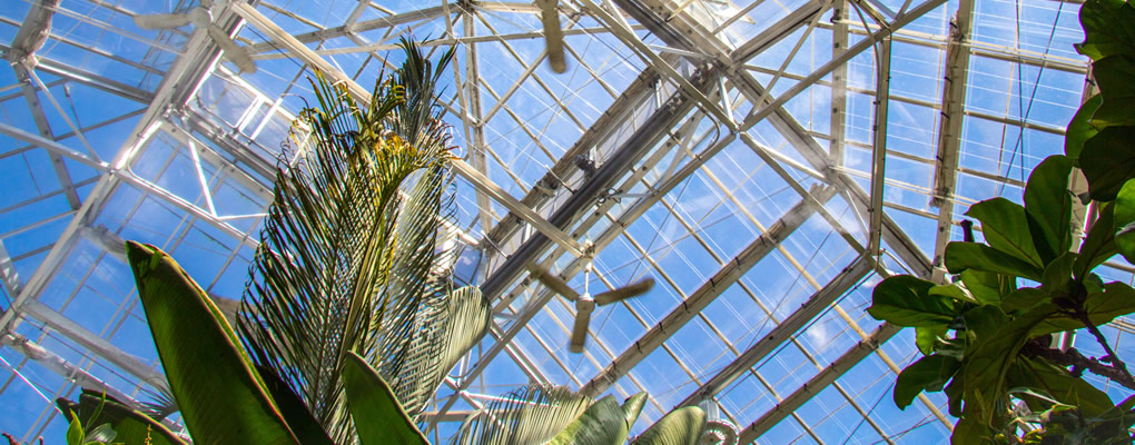 Interior of The Conservatory looking upwards to sky