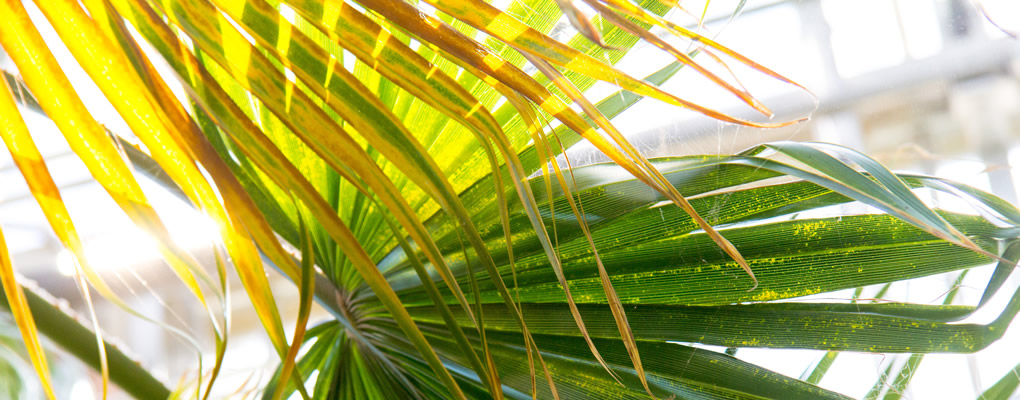 Close up of palm-like fronds