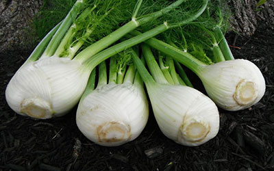 4 Fennel Antares laying down on a table.